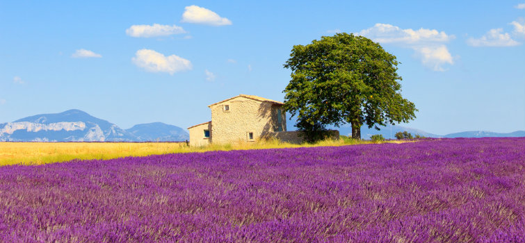provence-1